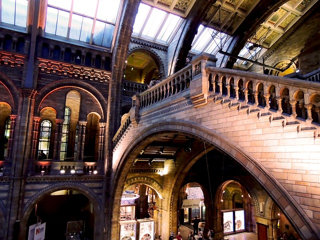 natural-history-museum-545184_640