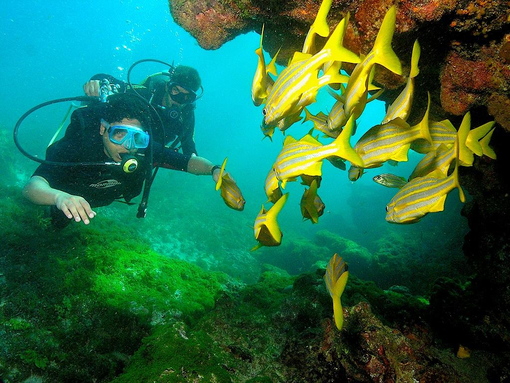 îles atlantiques brésiliennes - fernando de noronha