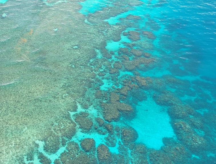 corail barrière Australie