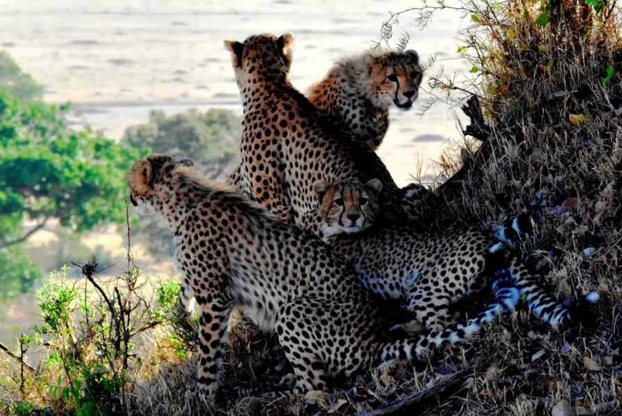 animaux Tanzanie