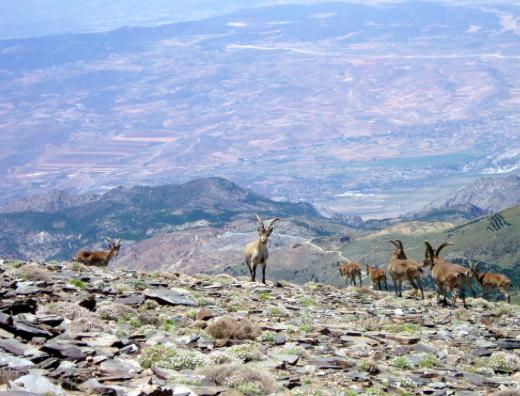 Sierra Nevada, Espagne