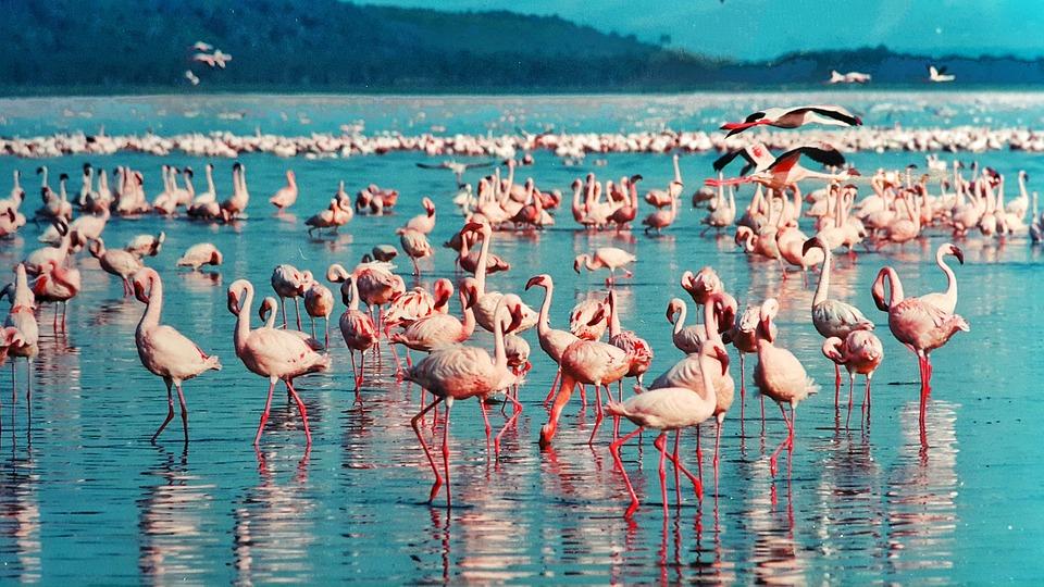 lac de nakuru vallee du grand rift kenya