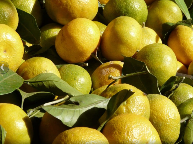 vergers-citron