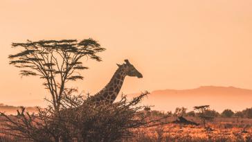coucher de soleil kenya