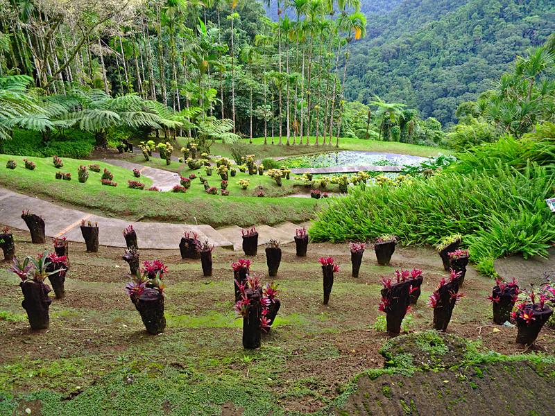visiter la Martinique jardins de Balata