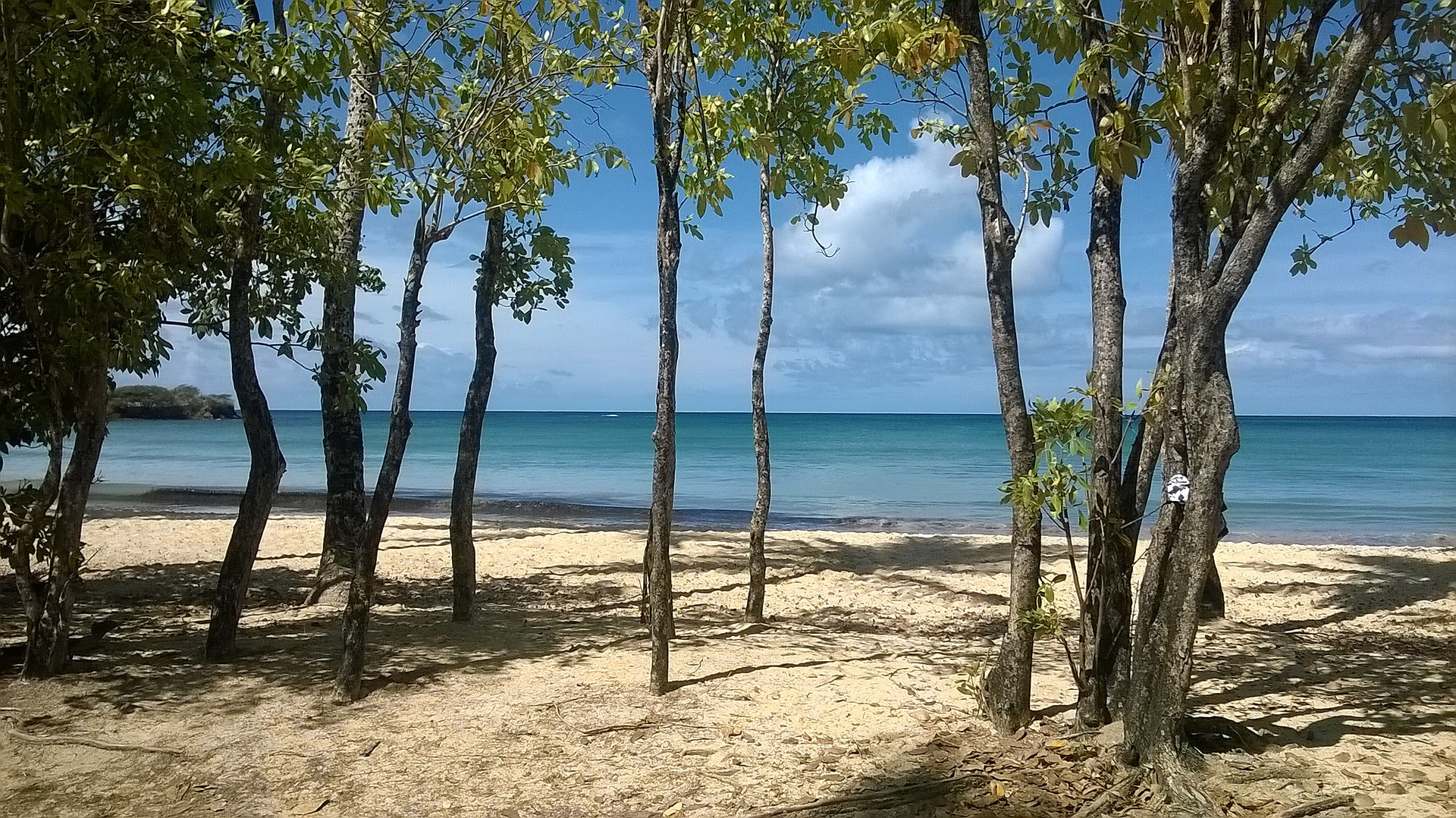 plage cocotiers île paradisiaque
