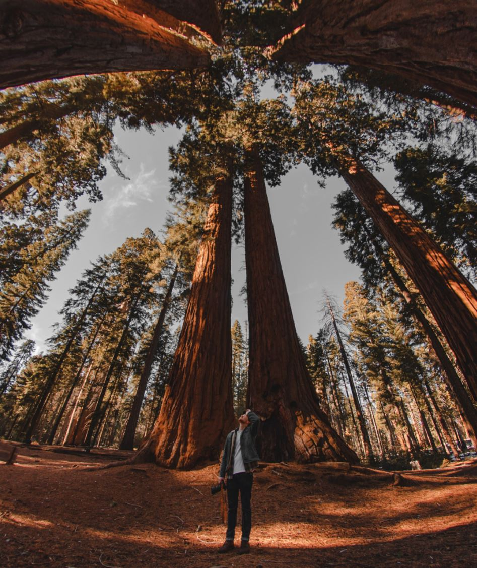 sequoia national parc