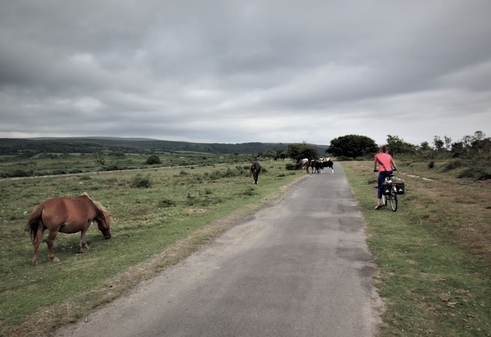 voyage Angleterre à vélo poneys chevaux sauvages