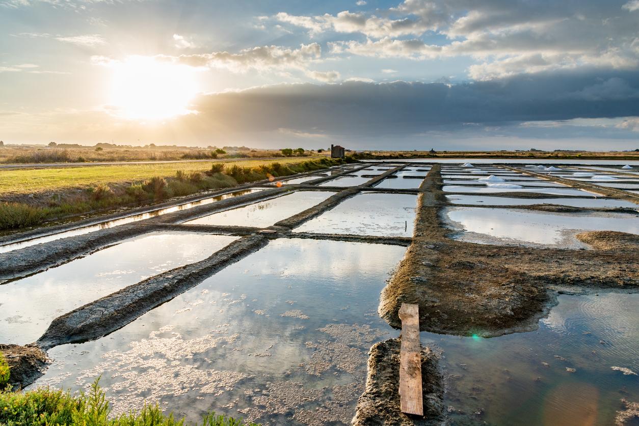 Marais salants sur l'île de Noirmoutier